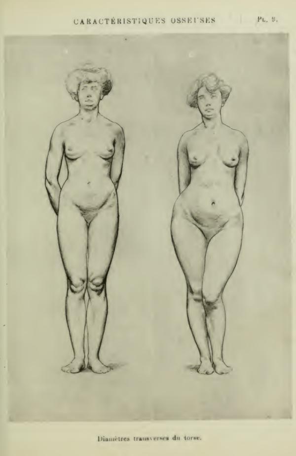 anatomia-humana-femenina-caracteristicas-oseas-torso