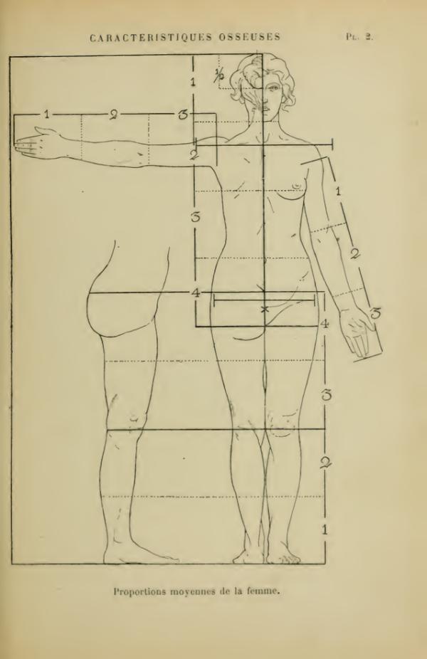 anatomia-humana-femenina-caracteristicas-proporciones-femeninas