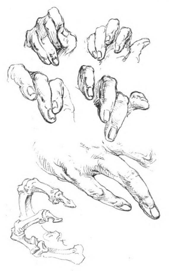 bridgman-libro-cien-manos-dedos