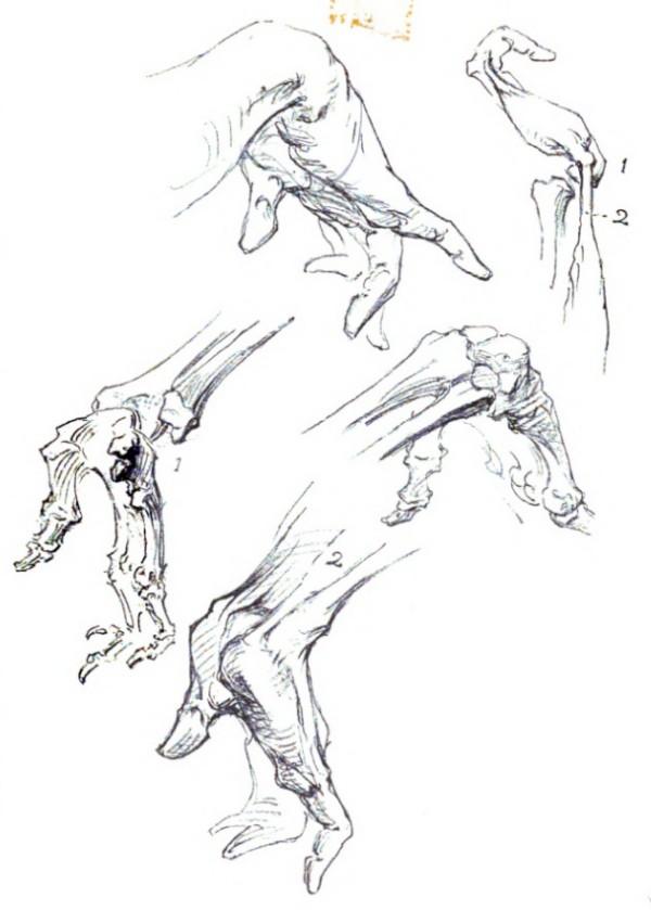 bridgman-libro-cien-manos-meñique-lado-palma