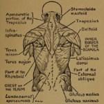 practical-art-anatomy
