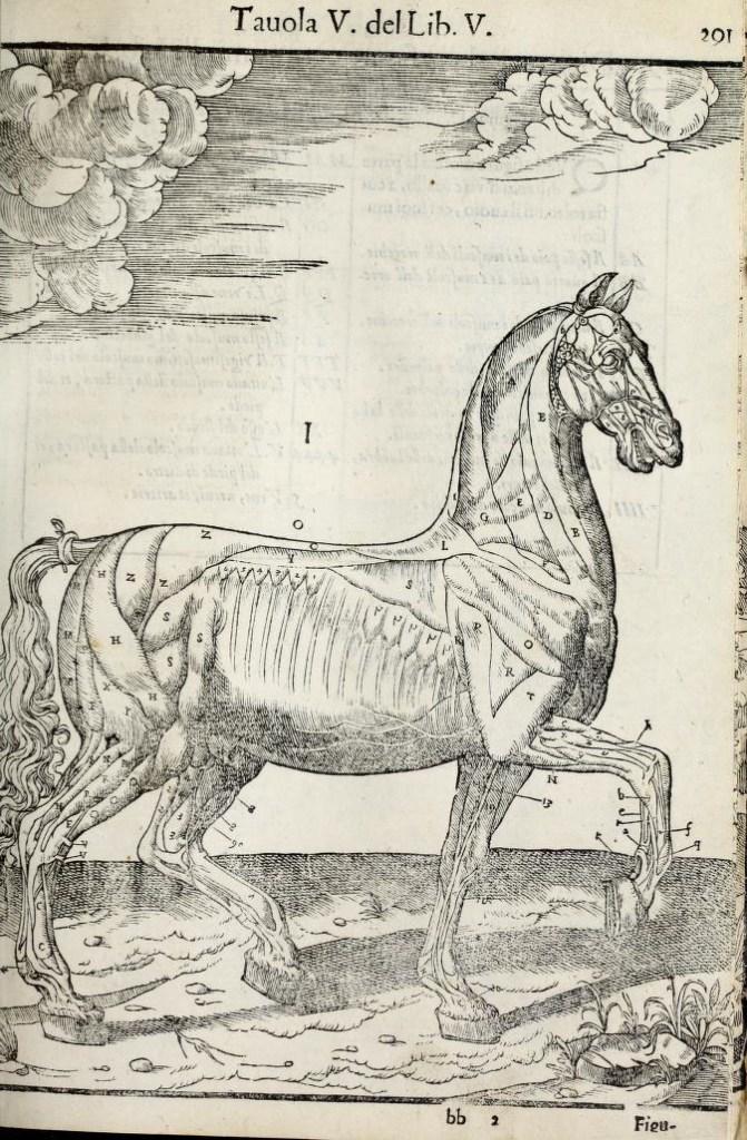 anatomia-caballo-carlo-ruini-page-291