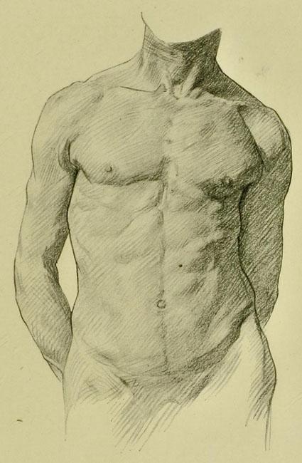 anatomia-humana-para-artistas-relieve-muscular-del-frente-del-torso-y-cuello