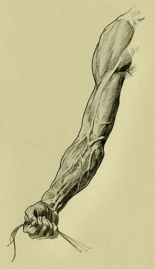 anatomia-humana-para-artistas-brazo-con-musculos-en-tension