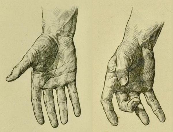 anatomia-humana-para-artistas-marcas-de-flexion-y-pliegues-de-la-mano