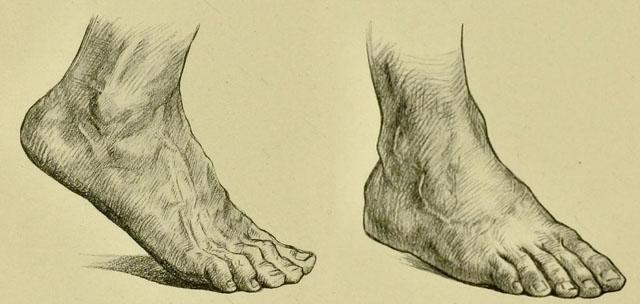anatomia-humana-para-artistas-dorso-del-pie