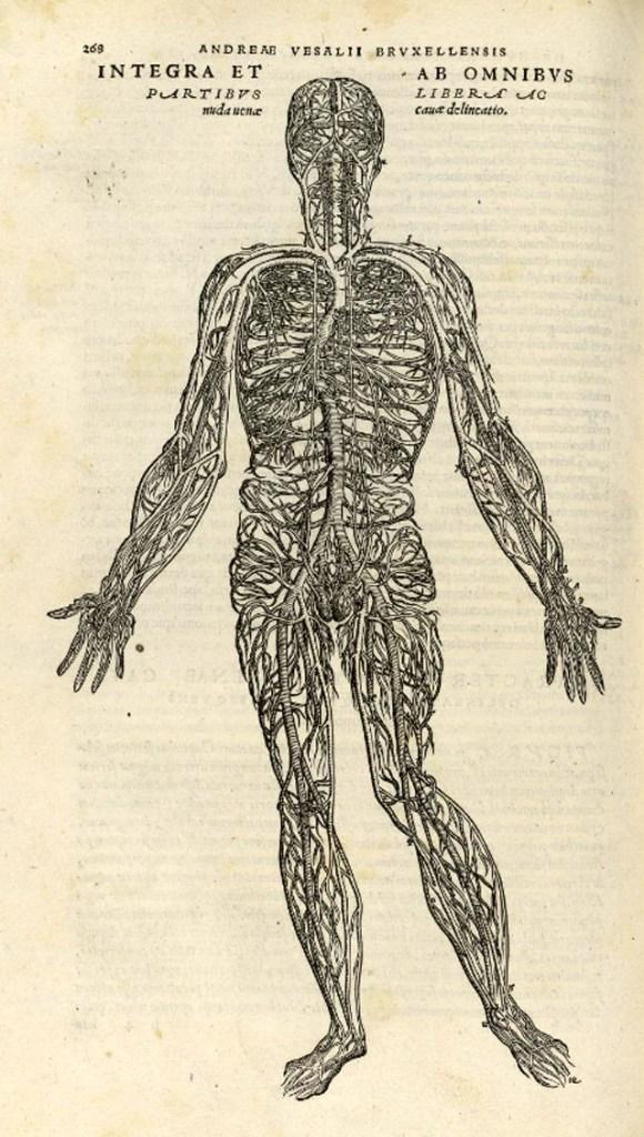 de-humani-corporis-fabrica-page-268