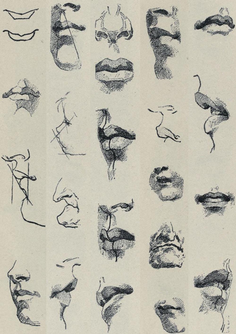 carlo-ruini-anatomia-labios