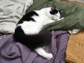 Marble sleeps