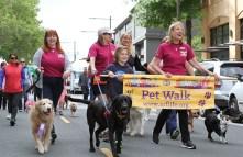 pet-walk-2_06171