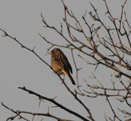 MPG - bird