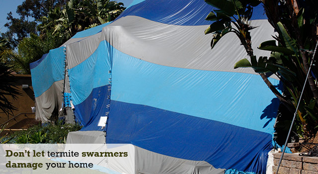 Termite Fumigation to exterminate drywood termite swarmers and infestations