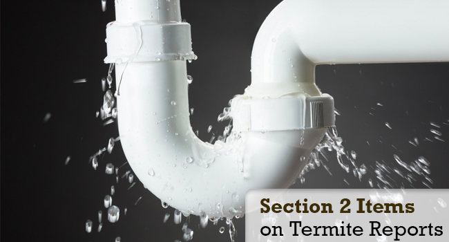 Section 2 Items on Termite Reports