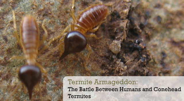 Termite Armageddon: The Battle Between Humans and Conehead Termites