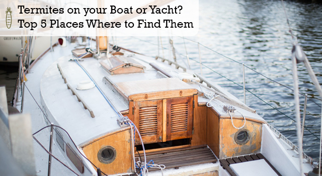 Termites on your Boat or Yacht? Top 5 Places Where to Find Them