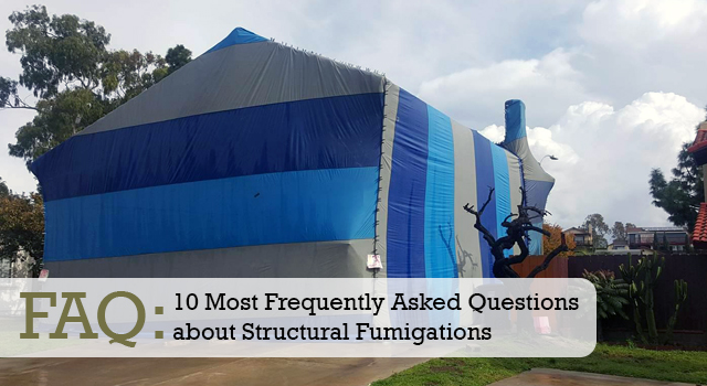 FAQ: 10 Most Frequently Asked Questions about Structural Fumigations
