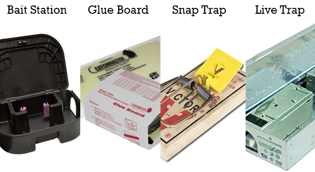 Different types of pest control methods: Baiting, Glue Board, Snap Trap and Live Trap