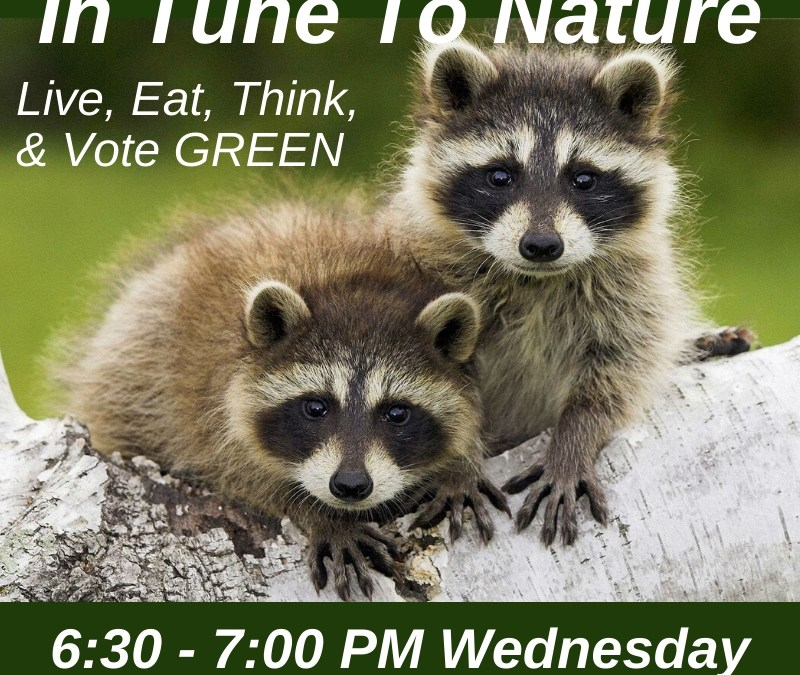 Podcast – Voting in GA 2020 Election: Interview with Brionte McCorkle with GA Conservation Voters