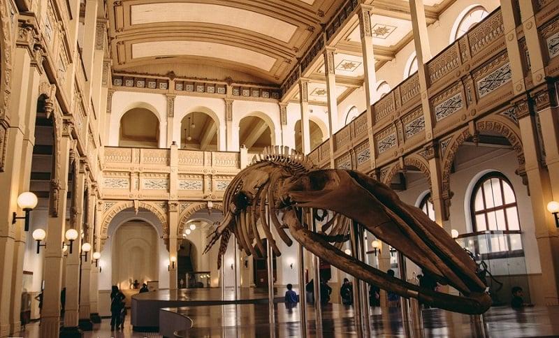 Museu Nacional de História Natural em Santiago do Chile - 2020 ...