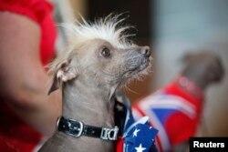 سن 2012 میں بدصورتی کا مقابلہ جیتنے والا چینی کتا