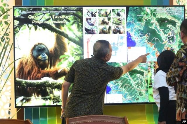Wiratno, salah seorang direktur di Kementerian Kehutanan Indonesia (tengah) memeriksa layar yang menampilkan peta Ekosistem Batang Toru di Sumatra Utara, dalam konferensi pers di Jakarta, 3 November 2017. (Foto: dok)