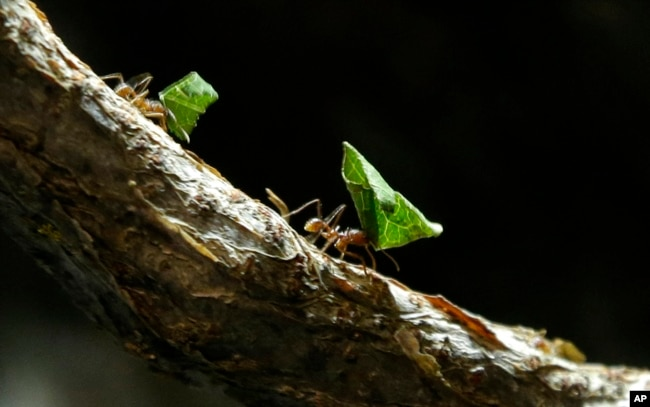When you camp, life slows down. You are able to enjoy things like watching leaf cutter ants do their thing.