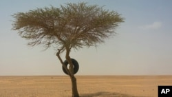 A tire used as a road marker hangs from a tree in Niger's Tenere desert region of the south central Sahara on Sunday, June 3, 2018. (AP Photo/Jerome Delay)