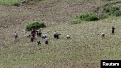 FILE - North Koreans farm in the field, along the Yalu River, in Sakchu county, North Phyongan Province, North Korea, June 20, 2015.