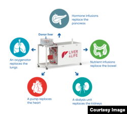 The perfusion machine replaces the functions of several organs to keep the donor's liver out of the body alive. (Image: Zurich University Hospital / beamue)