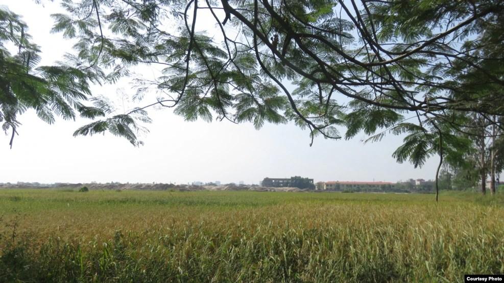 Một cánh đồng tươi tốt ở Đồng Kỵ đang bị san lấp một cách không thương tiếc. (Ảnh: Lê Anh Hùng)