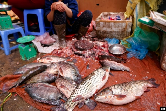 Hội nghề cá Việt Nam khuyến cáo không dùng cá đánh bắt trong thời gian này.