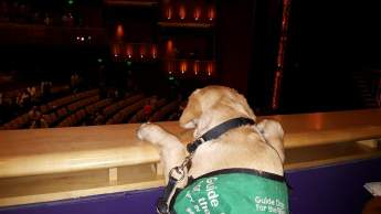 Jersey Boys with Paws of Fame