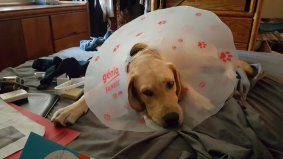 After neutering - Wearing the cone