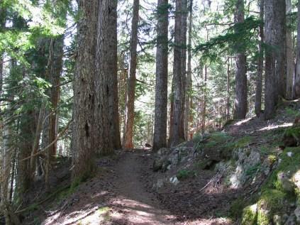 Our gentle climb toward the ridge begins