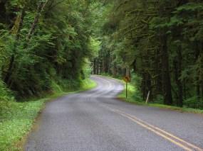 Upper Hoh Road
