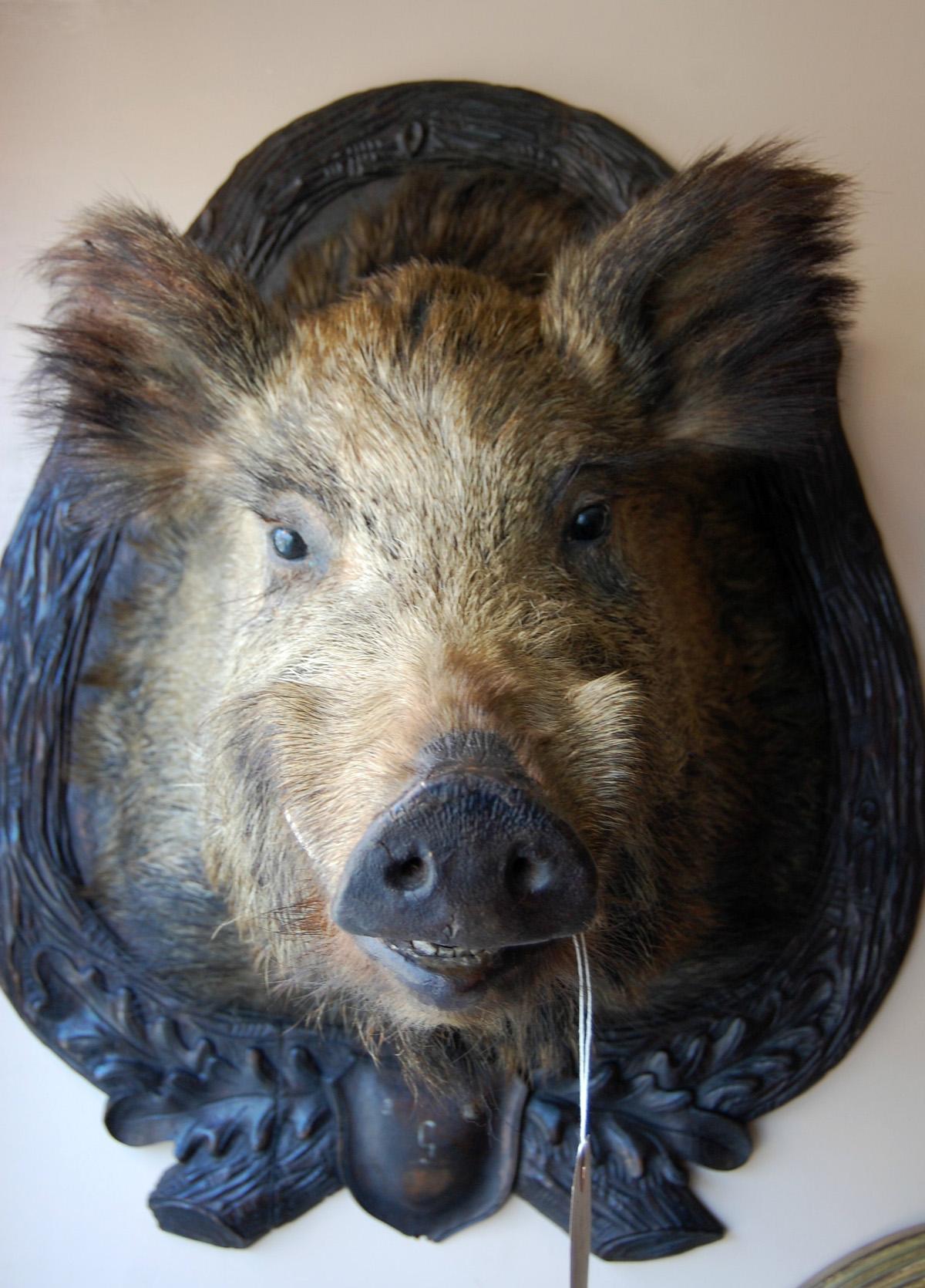 Boars Head