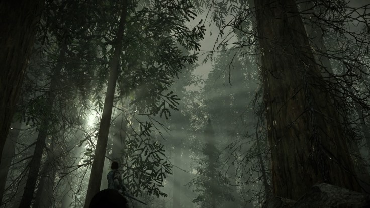 SHADOW OF THE COLOSSUS Forest