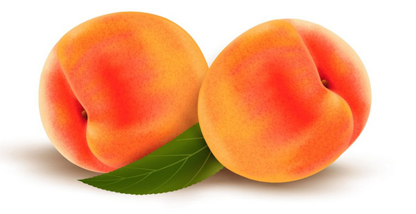 How to Draw Vector Peaches Using Gradient Mesh in Adobe Illustrator