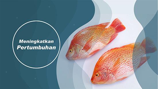 pertumbuhan ikan nila