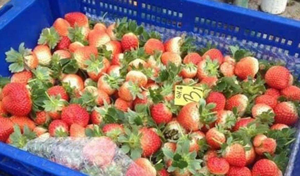 pasca panen strawberry