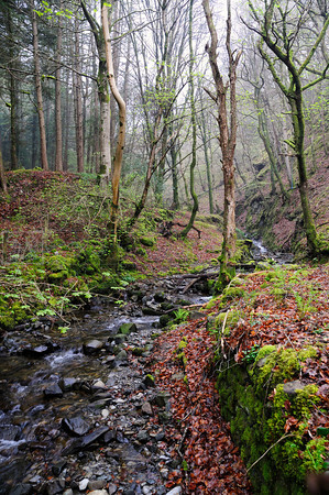 Rocky Stream in Snowdonia Woods