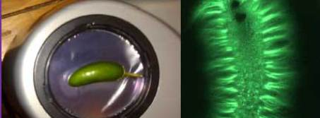 bio-well veggie scan