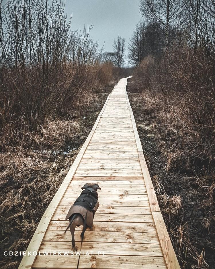 Biebrzański Park Narodowy z psem