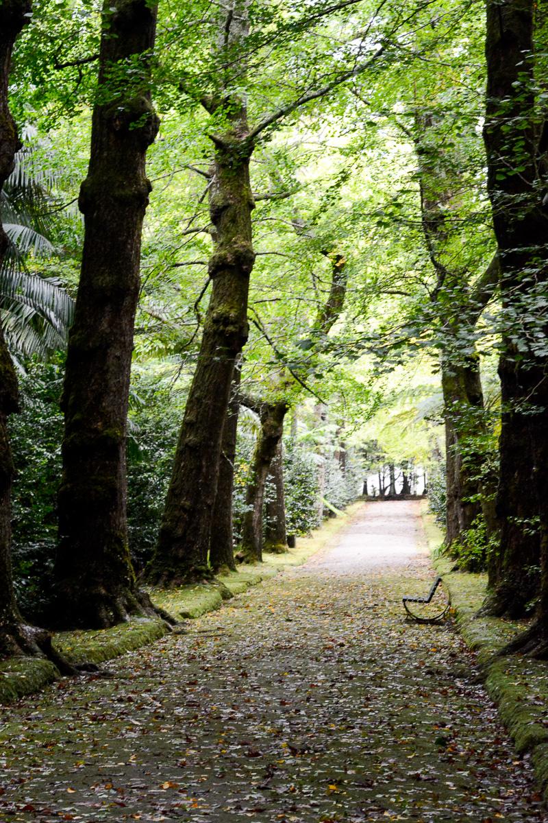 Park Terra Nostra w Furnas