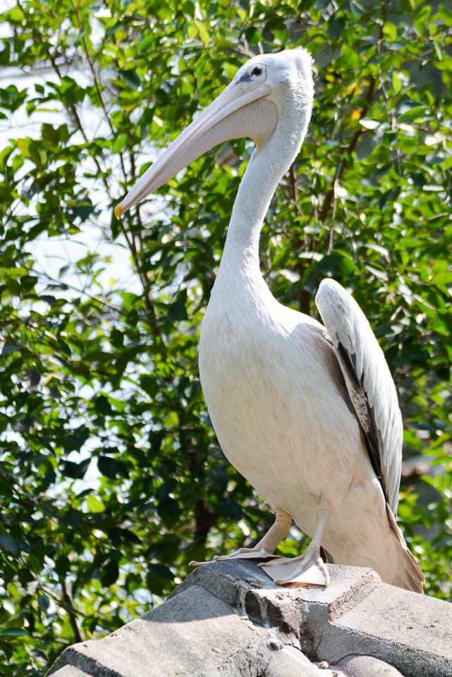 KL Bird Park-11
