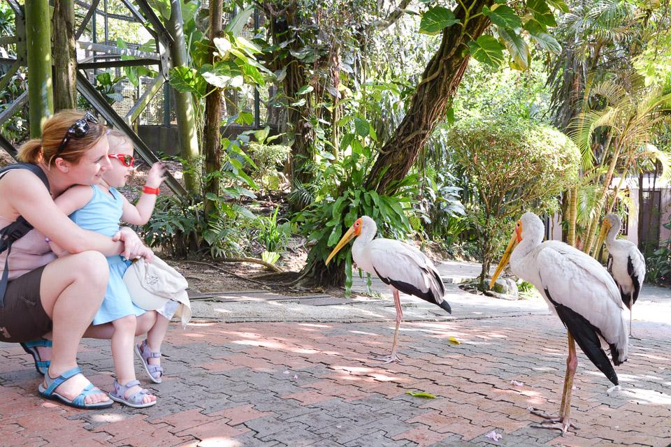 KL Bird Park-2