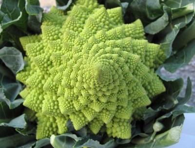 Spirale Fibonacci Pianta grassa