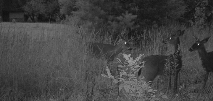 Digital Game Camera Review New Trail Cameras For Deer
