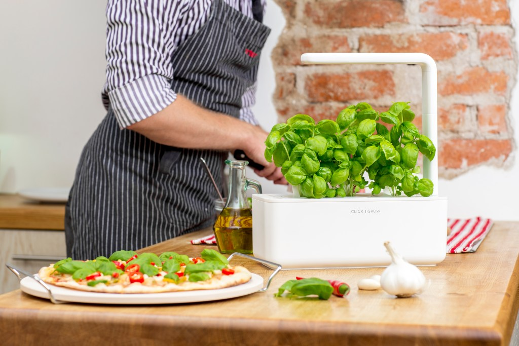 making pizza basil garden click and grow