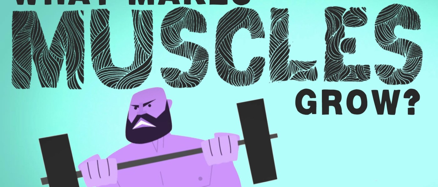 What makes muscles grow? 1